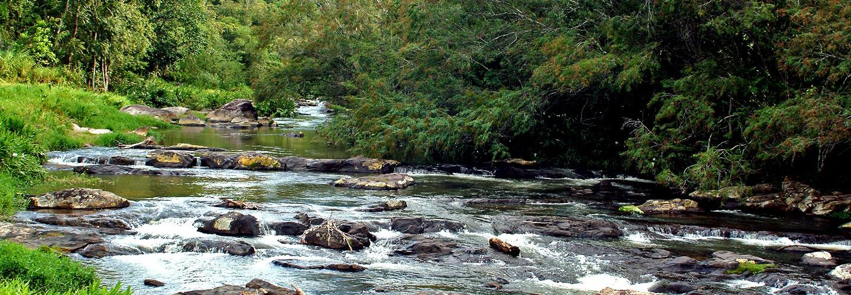 A Bluquimi ajuda na preservação do meio ambiente